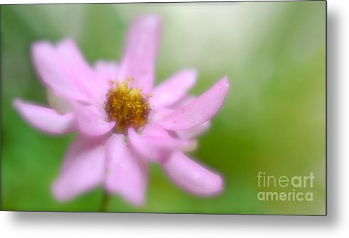 Flower Metal Print featuring the photograph Heavenly Bloom by Christina Williams