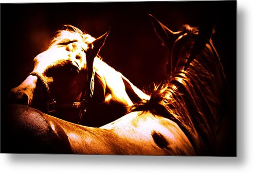 Horses Metal Print featuring the photograph Horses In The Afternoon by Travis Truelove