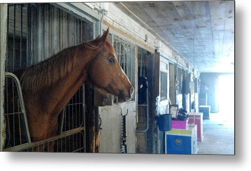 Horse Metal Print featuring the photograph Listening by Lisa Wormell
