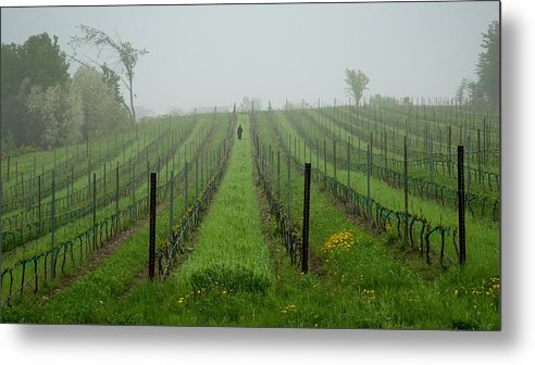 Vine Metal Print featuring the photograph Lone Figure In Vineyard In The Rain On The Mission Peninsula Michigan by Mary Lee Dereske