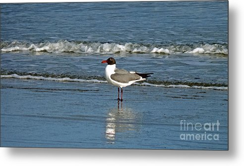 Seagull Metal Print featuring the photograph Seagull by Linda Vodzak