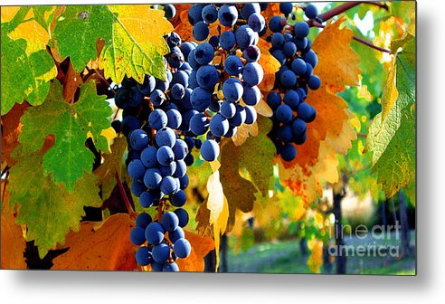Autumn Metal Print featuring the photograph Vineyard 2 by Xueling Zou