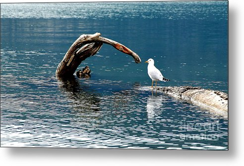 Water Metal Print featuring the photograph Bird And Log by Barry Shaffer