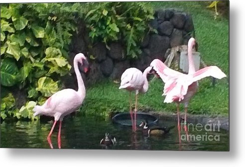 Birds Metal Print featuring the photograph Flamingo Party by Silvie Kendall