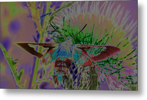 Moth Metal Print featuring the photograph Hummingbird Moth by Rick Rauzi
