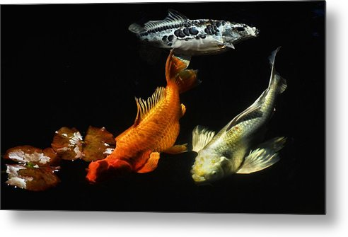 Koi Metal Print featuring the photograph Koi By The Lillies by Don Mann
