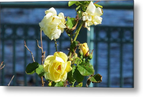 Nature Metal Print featuring the photograph Roses At The Shore by Loretta Pokorny