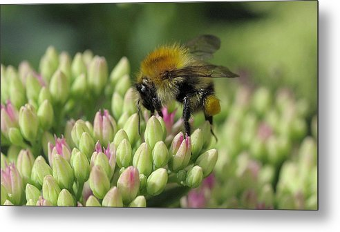 Bee Metal Print featuring the digital art Bee by Dorothy Binder