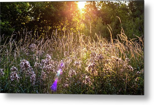 East Bank Trail Metal Print featuring the photograph Field Faeries by Vincent Buckley