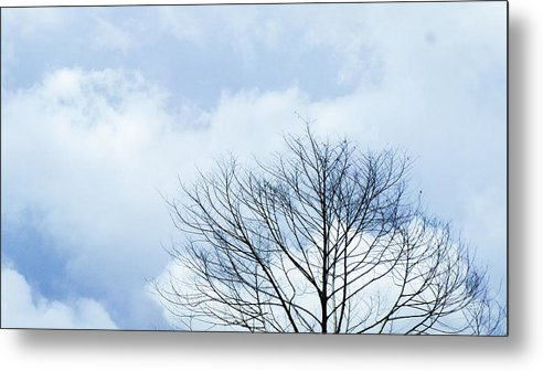 Winter Fall White Sky Metal Print featuring the photograph Winter Tree by Adelista J