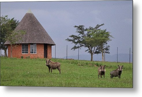 South Africa Metal Print featuring the photograph South Africa by Paul James Bannerman