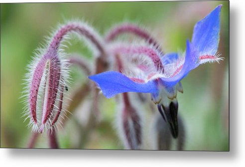 Macro Metal Print featuring the photograph Closeup Of A Colourful Flower by Wael Alreweie