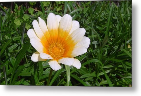 Australia Metal Print featuring the photograph Australia - White Yellow Daisy Flower by Jeffrey Shaw