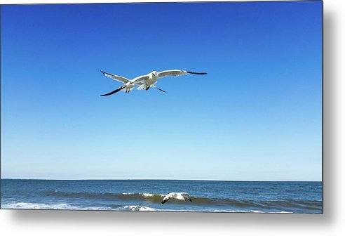 Metal Print featuring the photograph Air Play by Belinda Jane