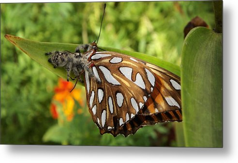 Spider Metal Print featuring the photograph Along Came A Spider by Heather Porfiriadis