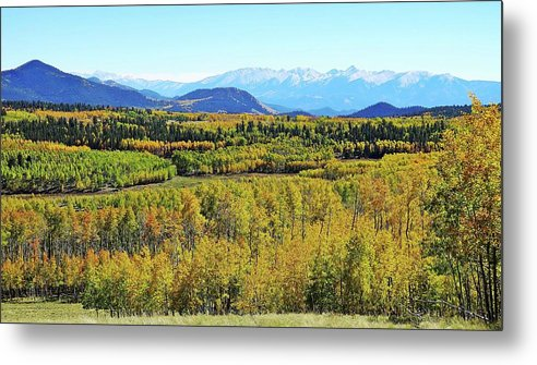 Aspen Forest Metal Print featuring the photograph Aspen Valley by Joseph Holub
