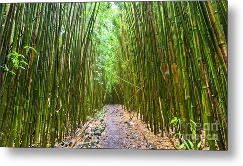 Bamboo Forest Metal Print featuring the photograph Bamboo Forest Trail Hana Maui 2 by Dustin K Ryan