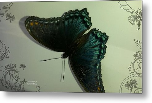 Butterflies Metal Print featuring the photograph Butterfly On My Car by Maxine Billings