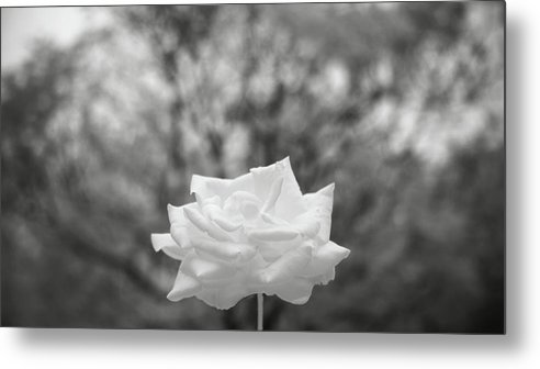 Metal Print featuring the photograph Bw 045 by Kam Chuen Dung