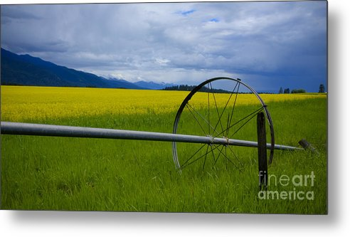 Canola Metal Print featuring the photograph Canola by Idaho Scenic Images Linda Lantzy