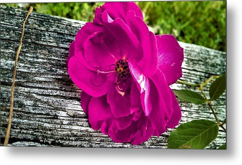 Floral Metal Print featuring the photograph Delicately Made by Kevin D Davis