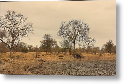 Water Metal Print featuring the photograph Dried Up Watering Hole by Lisa Byrne