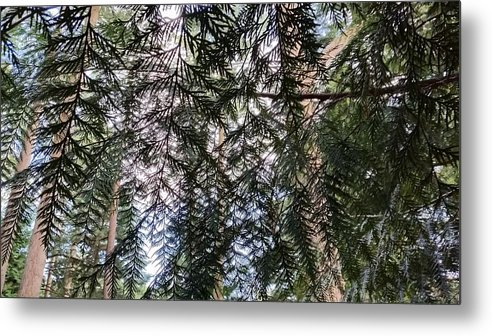 Nature Trees Green Trunks Sky Arboretum Westonbirt Forestry Commission Tetbury Ancient Woodland Forest Highgrove Prince Of Wales Charles Metal Print featuring the photograph Forest by Ian Hobbs