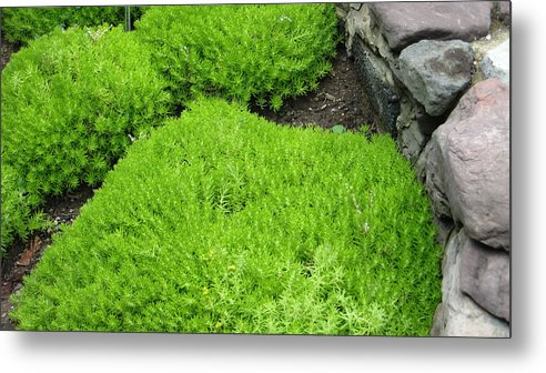 Metal Print featuring the photograph Green Rock by Virgil Dublin
