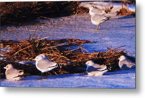 Beach Artwork Metal Print featuring the painting Huddling On A Winter Day by Eric Schiabor