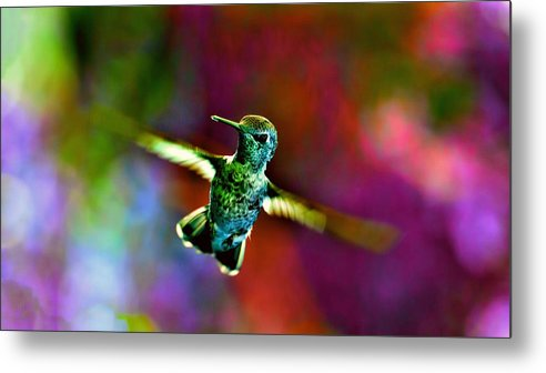 Bird Metal Print featuring the photograph Humming by Ca Photography