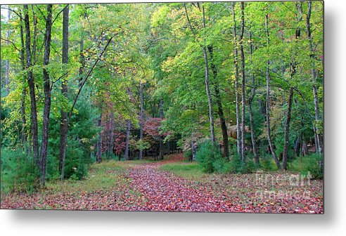 Landscape Metal Print featuring the photograph Into The Forest by Todd Blanchard