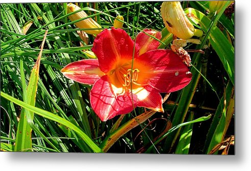 Lily Metal Print featuring the digital art Lily by Dorothy Binder
