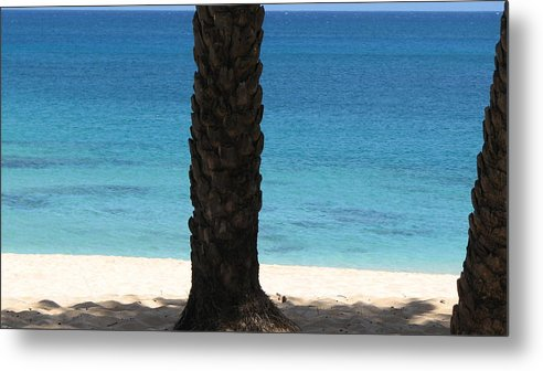 Palm Tree Metal Print featuring the photograph Lone Palm by Kathryn Carlin