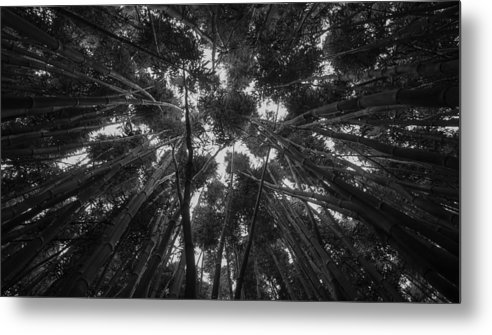 Hawaii Metal Print featuring the photograph Lost Among The Bamboo by William Sikora