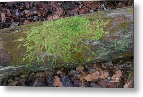 Moss Metal Print featuring the photograph Moss On A Log by Maxine Billings