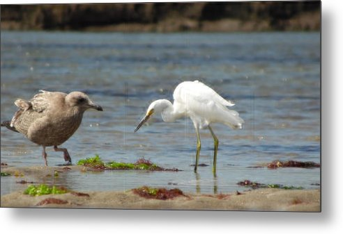 Birds Metal Print featuring the photograph Neighbors by Julie Houle
