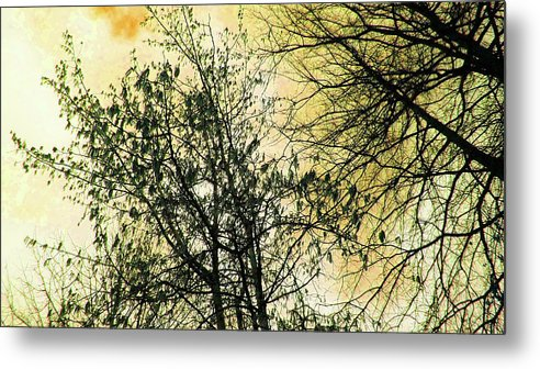 Orange Metal Print featuring the photograph Orange Sky by Tommy Carhart