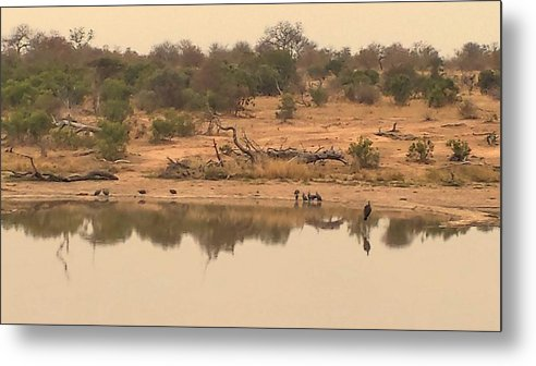 Water Metal Print featuring the photograph Reflections On Safari by Lisa Byrne