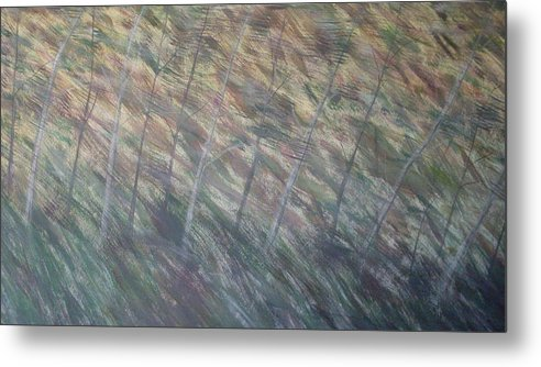 Birch Aspen Trees Landscape Poison Ivy Metal Print featuring the painting Right There by Sally Van Driest