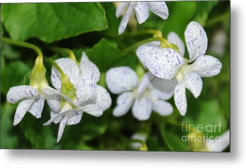 Speckled Flowers Metal Print featuring the photograph Speckled Flowers by Patrick Short
