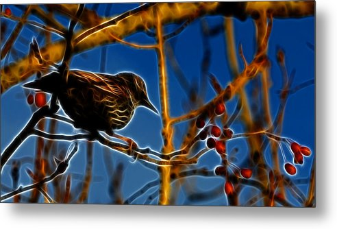 Reifel Metal Print featuring the photograph Starling In Winter Garb - Fractal by Lawrence Christopher