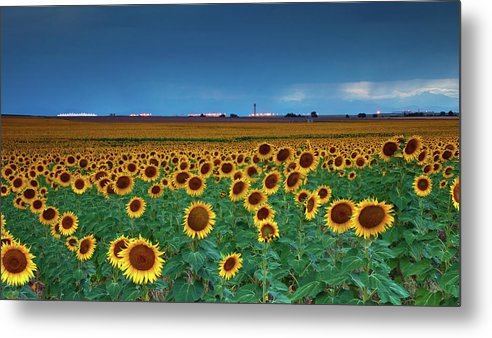 Colorado Metal Print featuring the photograph Sunflowers Under A Stormy Sky By Denver Airport by John De Bord