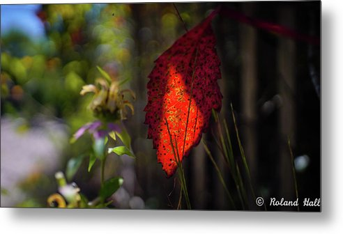 Fall Metal Print featuring the photograph The Calling Of Fall by Roland Hall