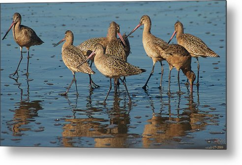 Godwits Metal Print featuring the photograph The Horde by Kenneth Hadlock