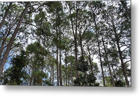 Green Metal Print featuring the photograph The Pines Of Tallahassee by Laura Martin