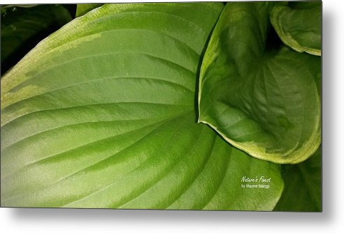 Hostas Metal Print featuring the photograph The Waterslide by Maxine Billings