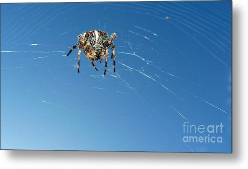 Spider Metal Print featuring the photograph Waiting by Larry Keahey