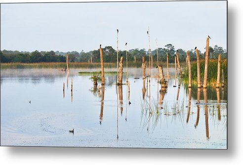 Birds Metal Print featuring the photograph Wetlands At Sunrise by Carl Clay