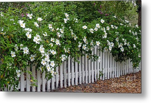White Metal Print featuring the photograph White Picket Fence by Linda Vodzak