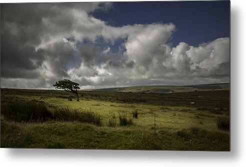 Tree Metal Print featuring the photograph Windswept by Philip Cartwright